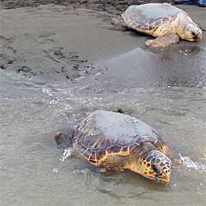 Schilkröten in Albanien –Bild: MEDASSET – anklicken für ganze Ansicht