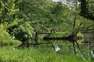Schwan an einem Teich in Drilon, Pogradec