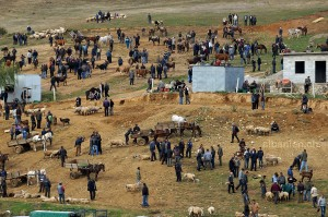 Viehmarkt zwischen Pogradec und Korça
