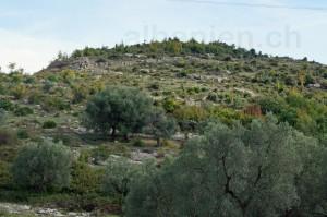 Ruinen Albanopolis
