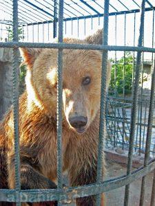 Trauriger Bär auf einem Restaurantparkplatz (Archivbild 2009)